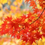 秋のデートはワンピースとの組み合わせで!